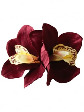 Pin-Up Double Orchid Burgundy