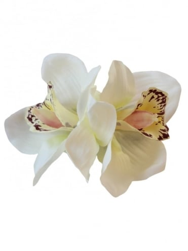 Pin-Up Double Orchid White