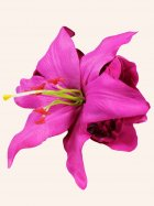 Pin-Up Hair Flower Lily Fuchsia