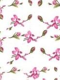 Raglan Blouse Cream Pink Floral